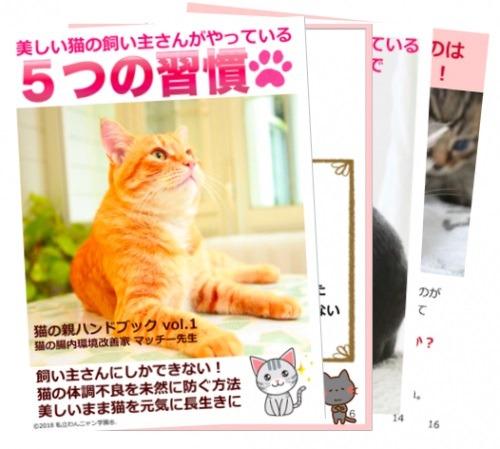 猫の腸内環境改善 猫 ネコ 美しいまま長生き クレオパトラの猫