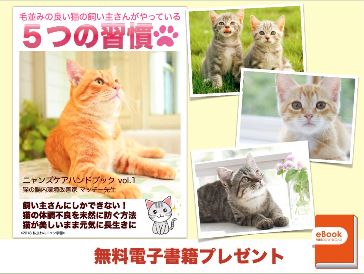 猫の飼い主さん 5つの習慣 ニャンズケア 腸内環境改善