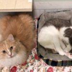 あなたの猫ちゃんはスーパー免疫ネコちゃんですか?