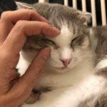 しつこい目ヤニで困っている猫ちゃんに朗報