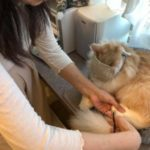猫の爪切りをしなかったらたいへんなことに!