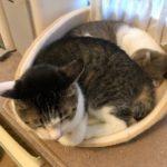 ついにうちの猫たちの猫団子が見れました!