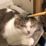 猫ちゃんが受けてしまったストレス、どう解消してますか?