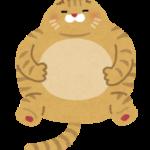 デブ猫さんvs細猫さん