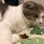 猫ちゃんの食欲がなくなったときどうしますか?