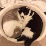 他猫と仲が悪い先住猫さんの心のケアをどうしてますか?