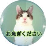 【緊急告知】猫の体温が下がっています!今すぐ改善してあげて!