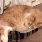 猫の困りごとをネット検索するよりも確実な方法