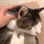 猫の首こりをほぐしてビーニャスネックへ