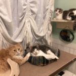 私が長期間留守にしても猫たちが体調不良にならないのはなぜなのか?