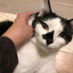 子猫の筋肉は触れないってご存知でしたか?