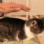 こういう猫さんは健康黄色信号かも!