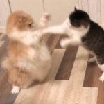 飼い猫からもらった感動の出来事