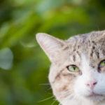 どの猫も感染している致死率100%の病気とは?
