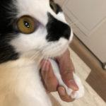 この方法ならどんな猫ちゃんでもお家で爪切りできます!