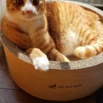 【実話】日本語がわかる猫ちゃん情報が届いてます。