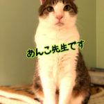 どの猫も5年ほどで日本語を理解します。