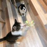 あなたの猫さんが好きなおもちゃはどれ?