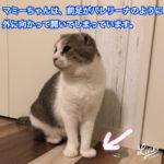 ユーチューバーヒカキンさんの猫