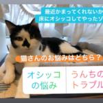 あなたの猫さんはどっちのお悩みですか?