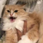 猫がシャーして怒った瞬間に