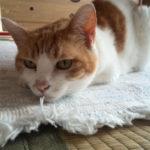【驚き】ヨタヨタ歩きの高齢猫ちゃんが急に・・・