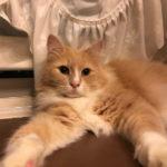 雷を怖がる猫のヒーリング