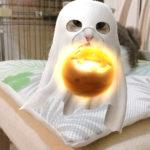 目からうろこの猫のストレスを軽減する方法