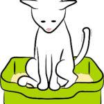 猫トイレあるある『ウンチのお悩み』