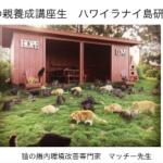 猫600匹放し飼いにされている島に行ってきます