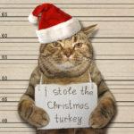 クリスマスでも猫は待ったなし!