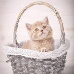 猫の写真集はなぜ売れないのか?