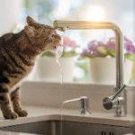 猫ちゃんに冬でもお水を飲んでもらう方法