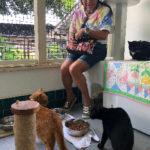 猫がたくさん居ても一切臭わない理由【オアフ島の保護施設視察報告】
