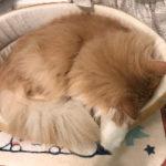 急な猫ちゃんの体調不良に慌てたことありませんか?