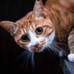 猫にもこんなに突然死があるなんて・・・