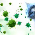 【緊急要開封】コロナウィルス感染 猫の場合