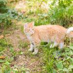 猫ちゃんの多くが感染しているウィルスとは?
