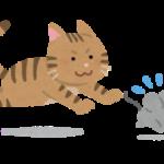 猫はなぜ人に飼われるようになったのでしょうか?