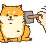 今だからこそ猫のおうちケアを!