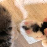 ここが盲点!猫の健康チェック