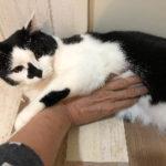 猫の健康チェック【お腹編】