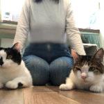 なぜ猫の飼い主はコロナウイルスを勉強しないといけないのか?