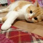落ち着かない猫ちゃんが簡単に寝ちゃった理由は・・・