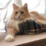 世界一ご長寿猫ちゃんが亡くなりました