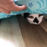 猫の知恵ってかわいい〜
