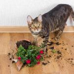 猫にアロマも植物も危険な理由