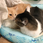 苦節6年でこんな猫たちが見られたなんて!
