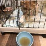 猫の病後の回復食に手作りスープが最適!