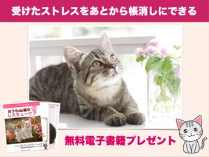 猫 猫の腸内環境改善 おうちケア 町野ゆうこ まっちー